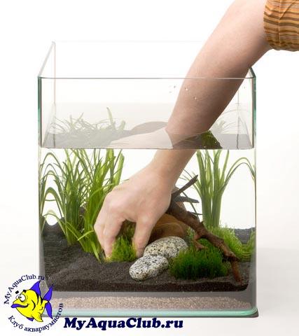 Можно ли сажать аквариумные растения в холодную воду 82