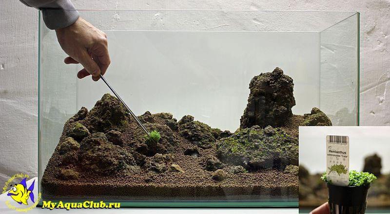 Когда можно сажать растения в аквариум 728