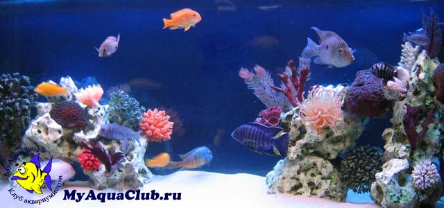Видеообзор декора аквариума псевдоморе
