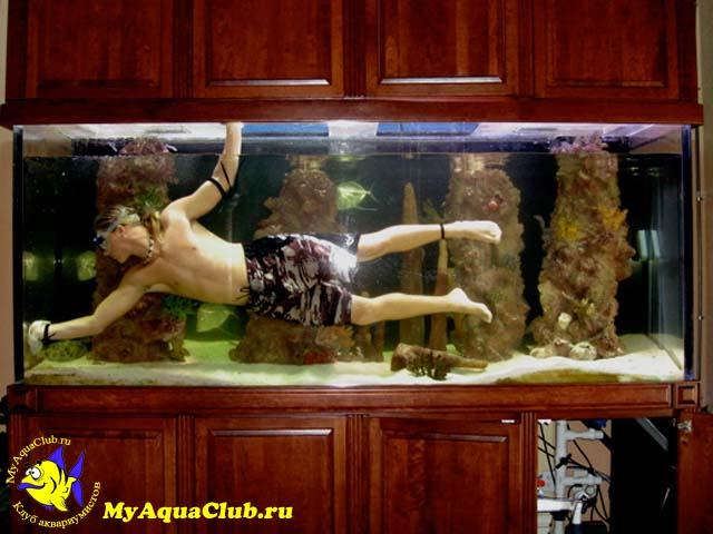 Чем мыть аквариум в домашних условиях