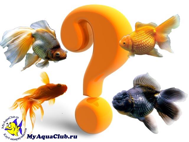 Выбираем рыбок для пресноводного