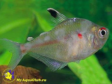 аквариумных рыбок фото и названия