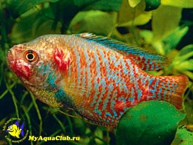 аквариумных рыбок болезни фото